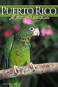 """Amazona Vittata"" parrot - Endangered species of Puerto Rico"