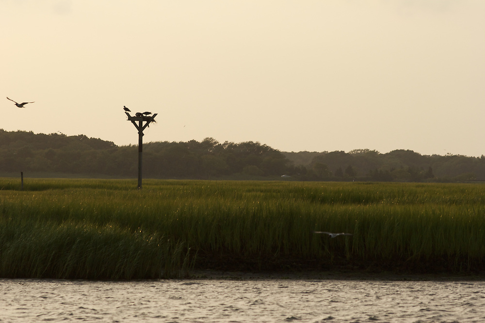 An osprey nest in the Cape May bay.