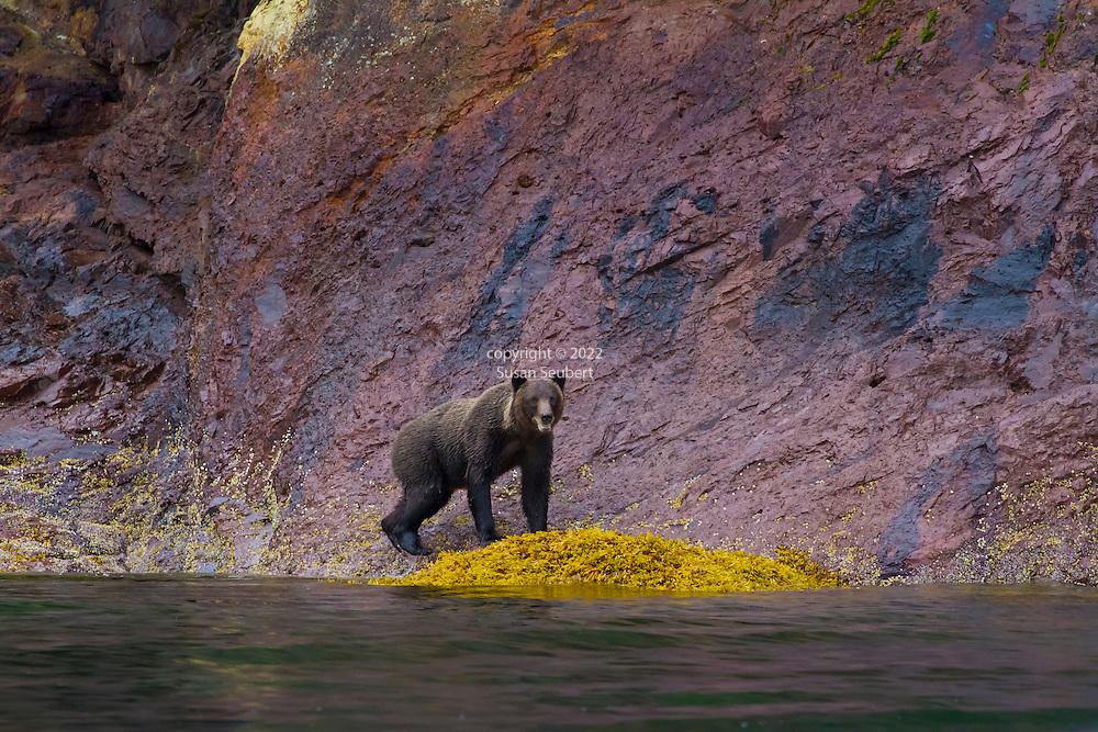Pavlof Harbor on Chichagof Island at the entrance to Freshwater Bay, Alaska