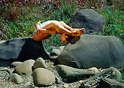 (sleeping tortoise)<br /> Barbara Wiechmann