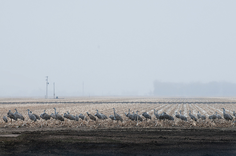 Rowe Bird Sanctuary, Nebraska