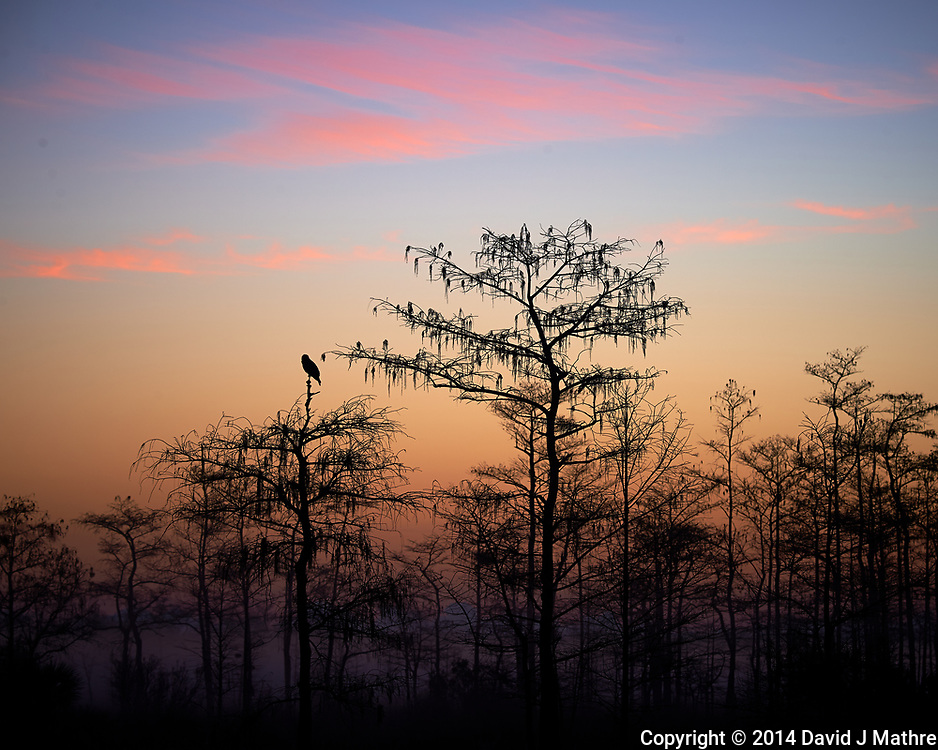 Crow Waiting For the Sun on a Foggy Morning at Big Cypress Swamp National Preserve in Florida. Image taken with a Nikon Df camera and 80-400 mm VRII lens (ISO 100, 160 mm, f/8, 1/20 sec).