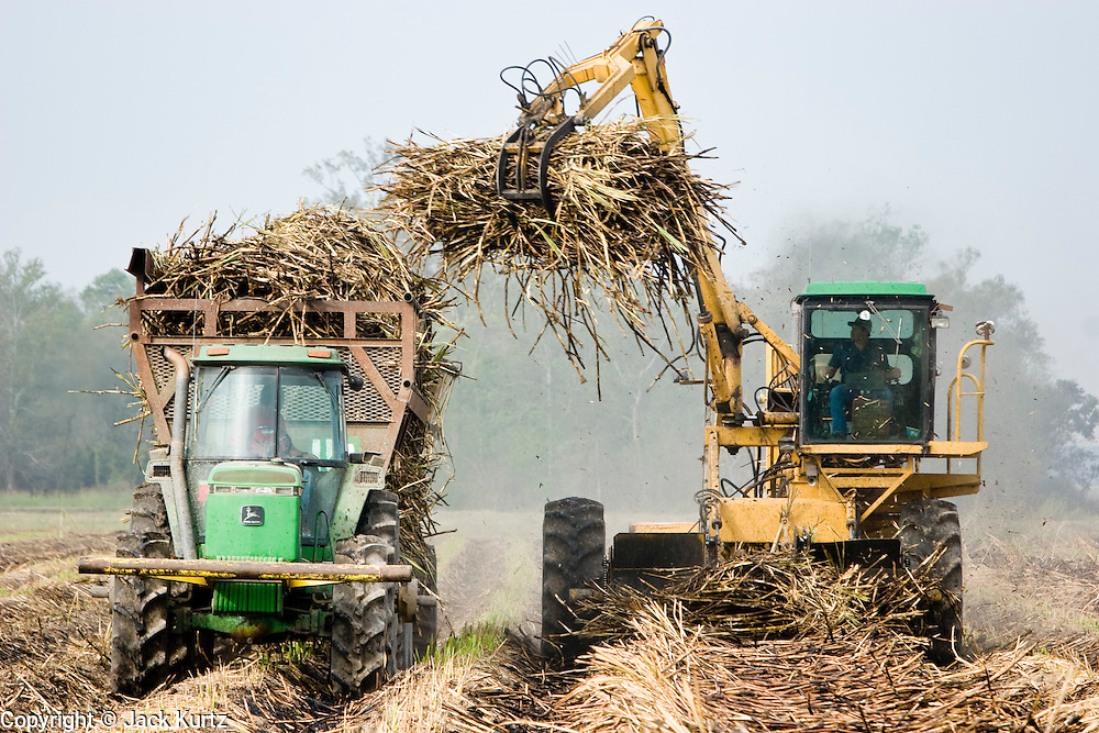 14 NOVEMBER 2005 - FRANKLIN, LA: The sugar cane harvest near Franklin, Louisiana during the 2005 sugar cane harvest. Louisiana is one of the leading sugar cane producing states in the US and the economy in southern Louisiana, especially St. Mary and Iberia Parishes, is built around the cultivation of sugar. Sugar growers in the area are concerned that trade officials will eliminate sugar price supports during upcoming trade talks for the proposed Free Trade Area of the Americas (FTAA). They say elimination of price supports will devastate sugar growers in the US and the local economies of sugar growing areas. They also say it will ultimately lead to higher sugar prices for US consumers. More than 460,000 acres of land are cultivated in sugar cane in Louisiana and more than 27,000 people work in the sugar industry.  PHOTO BY JACK KURTZ