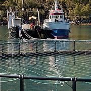 Three weeks aboard the Kong Harald. Hurtigruten, the Coastal Express. Salmon aquaculture of a Fishing factory.
