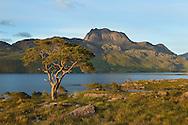 Pine trees and Slioch, Loch Maree, Torridon, North-west Scotland