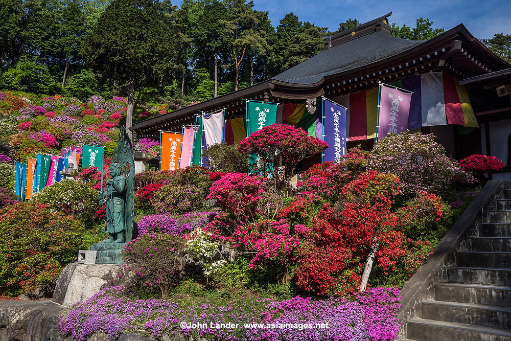 Shiofune Kannon-ji is most famous for its azaleas that bloom in late April and early May, with 17,000 trees from fifteen different types.  The plants form a unique azalea garden that is unusual in its design and conception.  On top of the undulating hills and mounds of azaleas is a large statue of Kannon the Buddhist goddess of mercy for whom the temple is named. <br />  Shiofune Kannonji temple is where founder Yao Bikuni is said to have lived 800 years through eating mermaid flesh. The temple was built in 650, though the main hall was erected in the Muromachi period.  The temple has been designated as an important cultural property by the government of Japan.