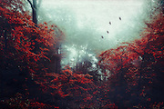 Misty and moody forest scenery with red foliage - photomanipualtion<br /> Prints &amp; more: http://bit.ly/2dzppwP<br /> Curioos Prints: http://bit.ly/2dCQX7k