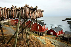 NORWAY LOFOTEN 29MAR07 - Stockfish racks in Sørvågen on the Lofoten islands...jre/Photo by Jiri Rezac..© Jiri Rezac 2007..Contact: +44 (0) 7050 110 417.Mobile:  +44 (0) 7801 337 683.Office:  +44 (0) 20 8968 9635..Email:   jiri@jirirezac.com.Web:    www.jirirezac.com..© All images Jiri Rezac 2007 - All rights reserved.