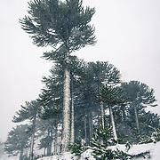 Nature & Rain Forest