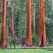 22 - Sequoia National Park