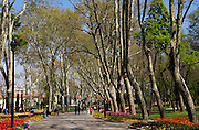 Gulhane Park with its Plane trees, in spring.