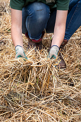 Adding straw to a path