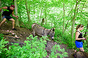 Peach Bottom, Pennsylvania - May 17, 2017: Chris McDougall and Ruby Rublesky trail run with donkeys Sherman Matilda, respectively, in rural Pennsylvanian Amish country May 17, 2017.<br /> <br /> Chris McDougall and his rescue donkey Sherman regularly run with a group of two other runners and two donkeys among the Amish farms in rural Pennsylvania.<br /> <br /> CREDIT: Matt Roth for The New York Times<br /> Assignment ID: 30206505A