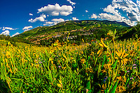 Wildflowers, Mountain View Trail, Snowmass Village, Colorado USA.