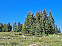 The Snowy Range has large meadows with stands of Englemann spruce and subalpine fir.  Medicine Bow Mountains, Wyoming.