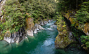 Blue Pools on a green day, in Mount Aspiring National Park, Southern Alps, near Makarora, Otago region, South Island of New Zealand. Blue Pools Track is an easy short walk through mature beech and podocarp forest to a swing bridge over the glacier-fed Blue River, whose water color depends upon flood & gravel cycles. From Blue Pools parking lot, Young River Mouth can be reached after 7 km on the Gillespie Pass Track (which can be shortened from Makarora Village via jetboat or Makarora River crossing). UNESCO lists Mount Aspiring as part of Wahipounamu - South West New Zealand World Heritage Area. This image was stitched from multiple overlapping photos.