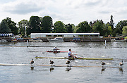 Henley on Thames. United Kingdom.  Dis-interested Canadian Geese Monday,  27/06/2016,   16:14:52   2016 Henley Royal Regatta, Henley Reach.   [Mandatory Credit Peter Spurrier/ Intersport Images]
