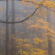 Autumn colored trees in Great Smoky Mountains National Park.