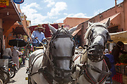 Horse and Cart rides through the Marrakesh Mellah inside the Medina, Morocco