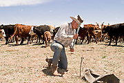 07 MAY  2004 -- WILLIAMS, AZ:  A cowboy pounds a Nordfork into the ground before spring branding on the Willaha Ranch, north of Williams, AZ, May 7, 2004. The ranch is in the high desert country near the south rim of the Grand Canyon. Nordforks are devices that pin the calf's head to the ground, helping the cowboys control the animal during branding. Arizona ranchers are in the midst of a ten year draught that has dramatically reduced the size of their herds. At the same time, public consumption of beef has soared because of the popularity of the Atkins and other high protein diets, so while prices are up, herd yields are down because of the drought.   PHOTO BY JACK KURTZ