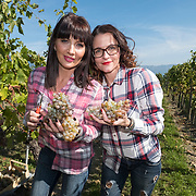 Harvest Time For The Slovenian Queens Of Wine