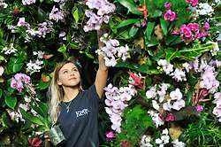 © Licensed to London News Pictures. 08/02/2018. LONDON, UK.  Jenny Forgie, Orchid specialist trainee, puts the finishing touches to the displays in Kew Garden's first Thai-inspired Orchids Festival, which celebration of Thailand's vibrant colours, culture, and magnificent plant life.   The festival runs from Saturday 10 February to Sunday 11 March 2018 and is hosted in partnership with the Royal Thai Embassy, London and Thai Airways.  Photo credit: Stephen Chung/LNP