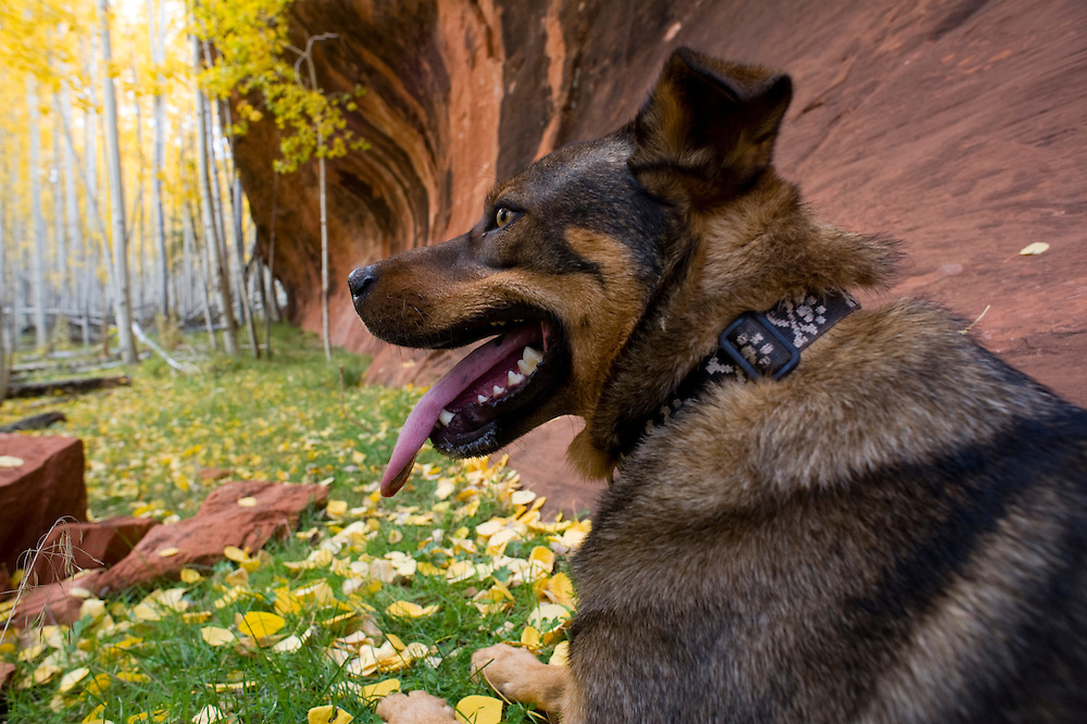 Wylie the trail dog at Kahuna Rock; Fall Mountain Biking in the Zuni Mountains