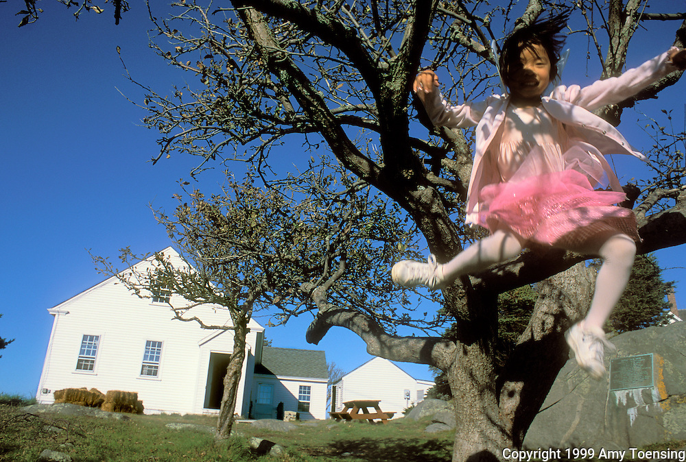 MONHEGAN ISLAND, MAINE - NOVEMBER 04: Claire Boynton leaps from a tree outside the one room schoolhouse November 4, 1999 on Monhegan Island, Maine. Monhegan Island, home to lobstermen and painters and a popular destination for tourists is twelve miles off the coast of Maine. Ringed by high, dark cliffs, its interior a mix of meadows, marsh and spruce groves, Monhegan is one of just 14 true island communities left off the coast of Maine. The island has a 65 permanent, year-round residents and the population grows to around 200 in the summer, with day-trippers adding several hundred more. (Photo by Amy Toensing) _________________________________________<br /> <br /> For stock or print inquires, please email us at studio@moyer-toensing.com.