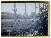 farmer workers in the field cutting grass or wheat France 1920s