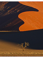 The perfect light for the perfect landscape. A breathtaking scene in Namibia's  Sossusvlei region as the last light of day touches a lone tree, behind which towers a giant ochre coloured sand dune.