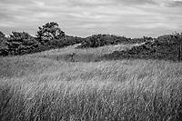 Field And Dunes - Ogunquit, Maine, 2016