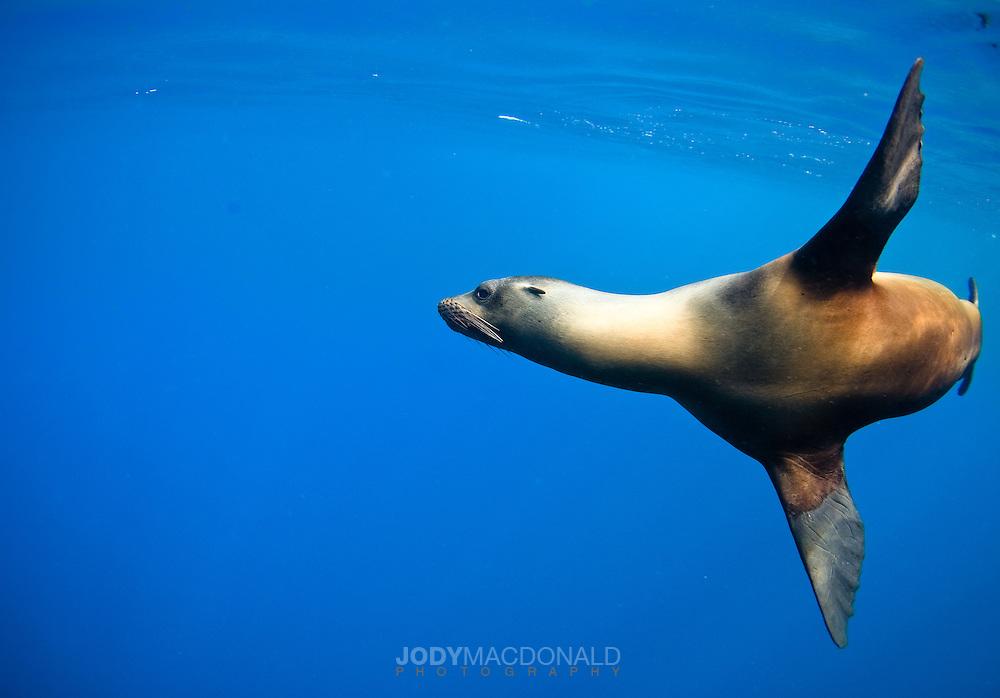 Galapagos Sea Line sweeps by near San Cristobal Island