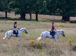 © Licensed to London News Pictures. 17/07/2020. London, UK. Horse riders enjoy the warm weather in Richmond Park as weather forecasters predict 28c for the end to the week but with rain on Sunday. As Prime Minister Boris Johnson calls for Britons to return to working in offices to help local service industries and the economic recovery. Photo credit: Alex Lentati/LNP