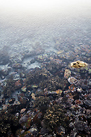 Intertidal zone wates, Agulhas National Park, Western Cape, South Africa