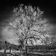 "I call this image ""Grandparents Tree"". <br />