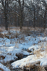 12 February 2010: Some prairie grass still stands and leaves still cling to trees even as snow covers the ground and limbs, a creek begins to thaw and water runs. The Prairielands, northern McLean County, Illinois