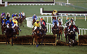 National Hunt Festival horseracing at Cheltenham Races, England, United Kingdom.