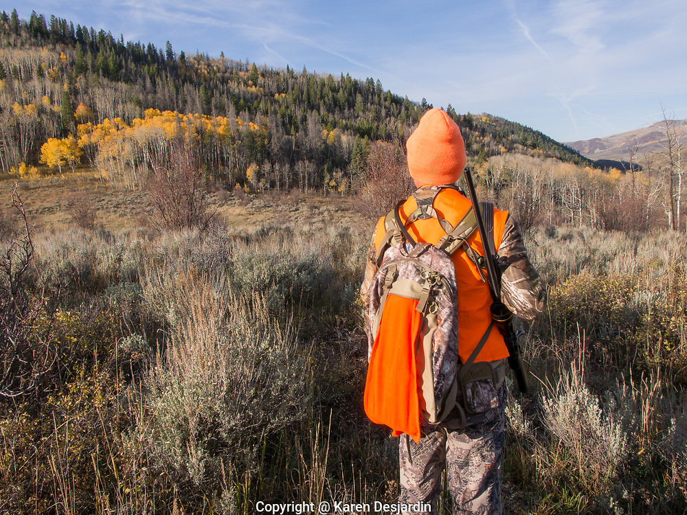 Hunter , dressed in orange and camouflage clothing, looks over meadow, Colorado.