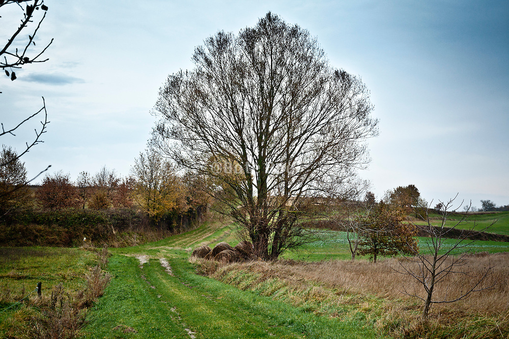 rural landscape with path and large tree