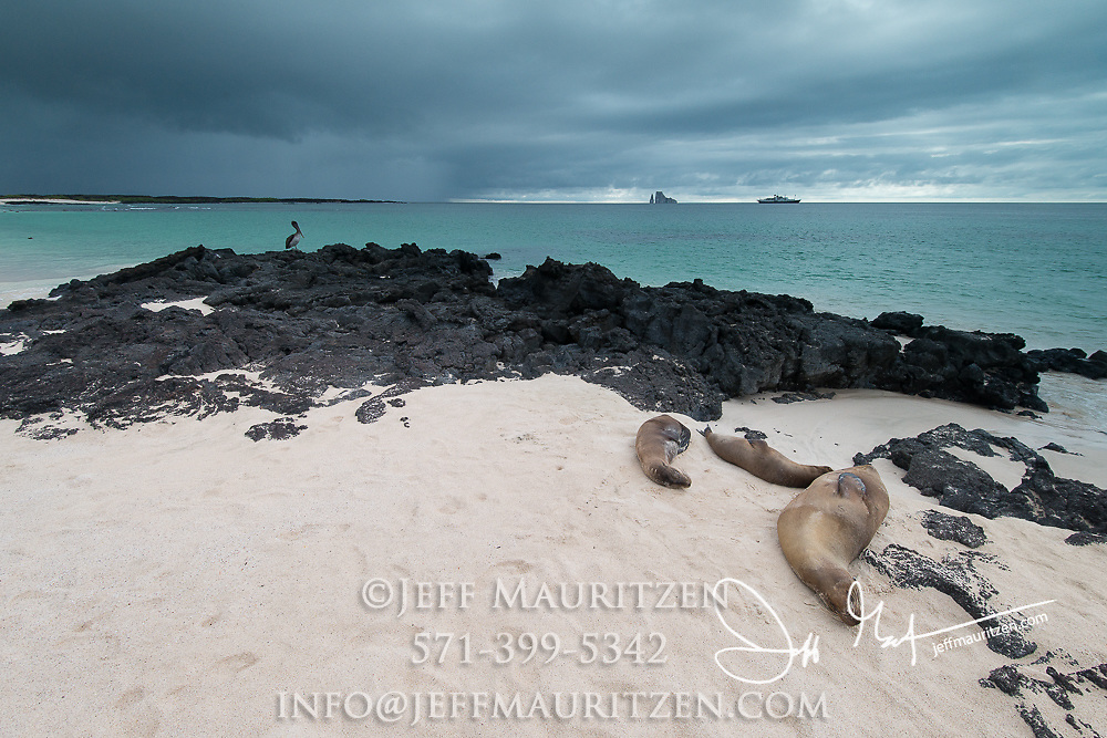 Sea lions rest on Cerro Brujo beach on San Cristobal Island in the Galapagos archipelago of Ecuador.