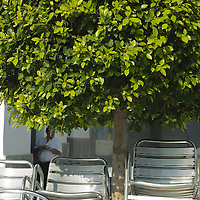Restaurant chairs stacked outdoors under a tree