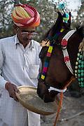 A horse being fed at the Mallinath Fair at Tilwara, near Balotra, Rajasthan, India.
