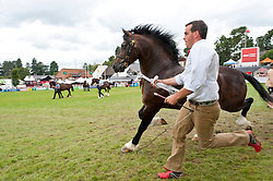 24/07/2019. Llanelwedd, Powys, UK. Entry 96.1425 Name: GWYNFAES SEREN WLEDIG - Meirion, Dianne & Caleb Evans took 1st place in the Welsh Cob Stallions - eight years and over Class 96. Cob Stallion events, together with stallion and cob championship  events and the prestigious 'George Prince of Wales Cup events take place in the main ring on the third day of the Royal Welsh Agricultural Show. The Royal Welsh Agricultural Society was Founded in 1904, and the Royal Welsh Agricultural Show is hailed as the largest and most prestigious event of its kind in Europe, with in excess of 200,000 visitors usually expected for the annual four day show period. Photo credit: Graham M. Lawrence/LNP
