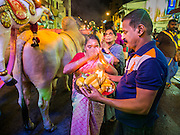 04 OCTOBER 2014 - GEORGE TOWN, PENANG, MALAYSIA: People receive blessings as a procession honoring Durga is drawn through the streets of George Town during the Navratri procession. Navratri is a festival dedicated to the worship of the Hindu deity Durga, the most popular incarnation of Devi and one of the main forms of the Goddess Shakti in the Hindu pantheon. The word Navaratri means 'nine nights' in Sanskrit, nava meaning nine and ratri meaning nights. During these nine nights and ten days, nine forms of Shakti/Devi are worshiped.   PHOTO BY JACK KURTZ