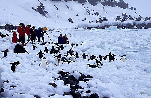 Antarctica, Tourists at Bellingshausen Island. South Sandwich Islands filming Adelie Penguins.