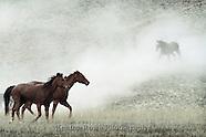 Montana Ranch Life