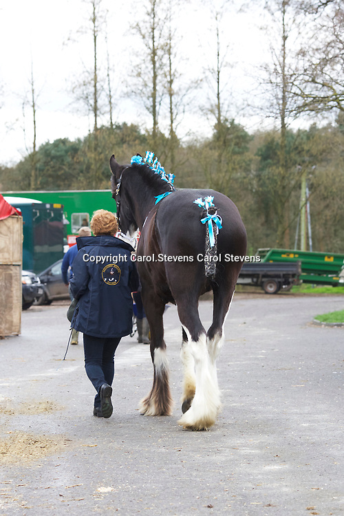 Shire Horse Society Spring Show 2017  Sights and  people around the showground<br /> Deborah Eastwood and FELLVIEW AUGUSTUS
