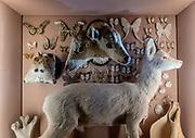 Venice: Museo di Storia Naturale