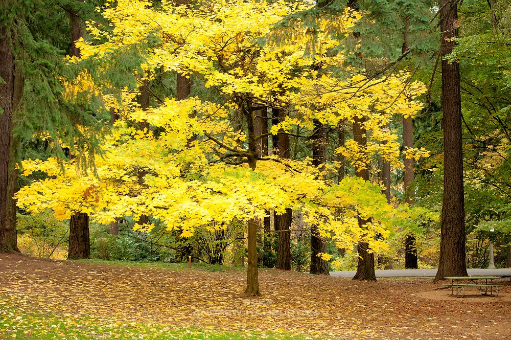 Fall colors, Mount Tabor Park, Portland, Oregon, USA