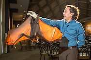 bat encounter bat encounter